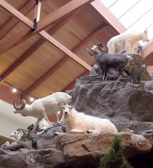 Cabela's Mountain Goats